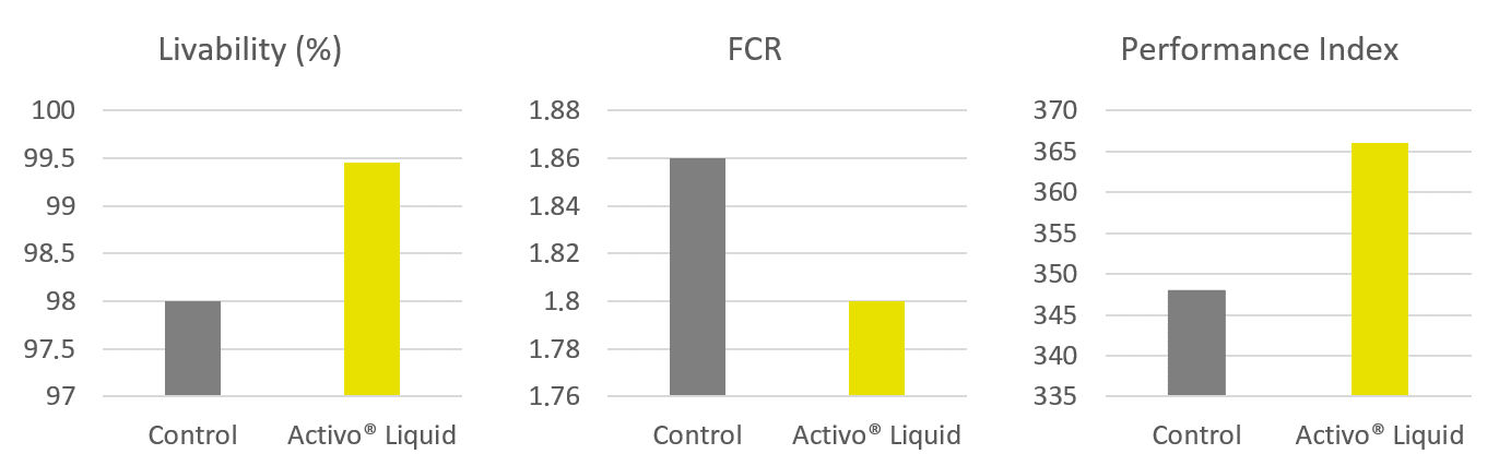 Improved broiler performance for Activo Liquid group