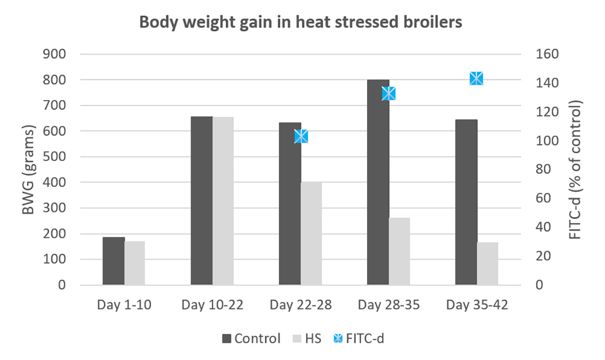 Figure 1 - Body weight gain in heat stressed broilers